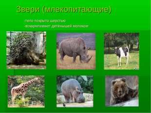 Звери (млекопитающие) -тело покрыто шерстью -вскармливают детёнышей молоком
