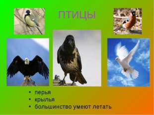 ПТИЦЫ перья крылья большинство умеют летать