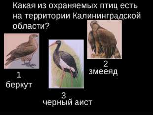Какая из охраняемых птиц есть на территории Калининградской области? 1 2 3 бе