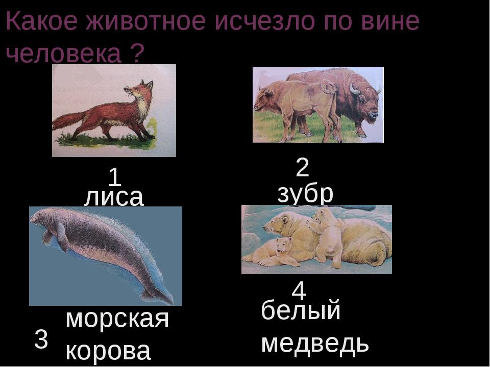 Какое животное исчезло по вине человека ? 1 2 3 4 лиса зубр морская корова бе...
