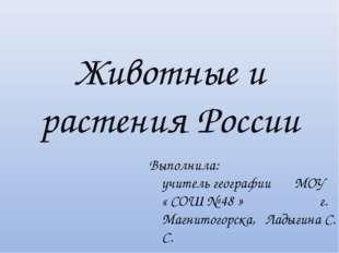 Животные и растения России Выполнила: учитель географии МОУ « СОШ № 48 » г. М