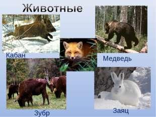 Кабан Медведь Зубр Заяц
