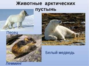 Животные арктических пустынь Песец Лемминг Белый медведь