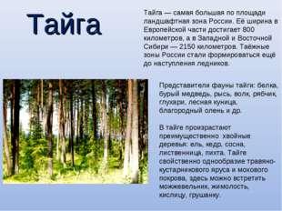 Тайга Тайга— самая большая по площади ландшафтная зонаРоссии. Её ширина в Е