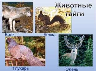 Волк Белка Глухарь Олень