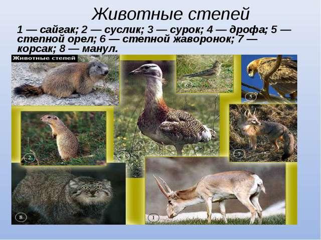 Животные степей 1 — сайгак; 2 — суслик; 3 — сурок; 4 — дрофа; 5 — степной ор...