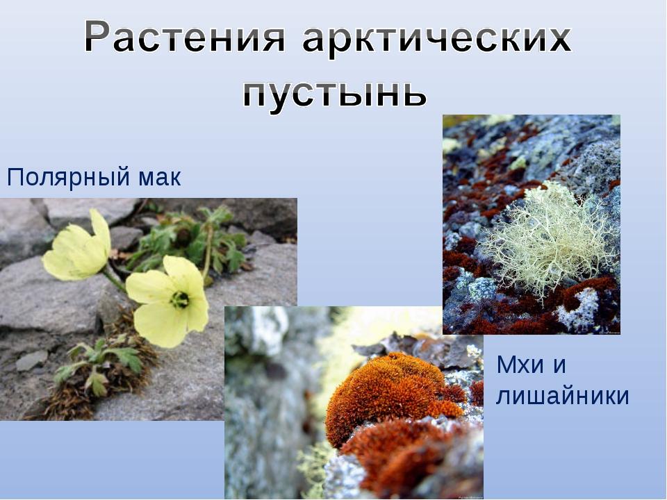 растения арктики картинки с названиями нет необходимости тратить