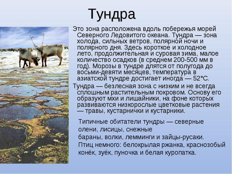 Тундра Это зона расположена вдоль побережья морей Северного Ледовитого океана...