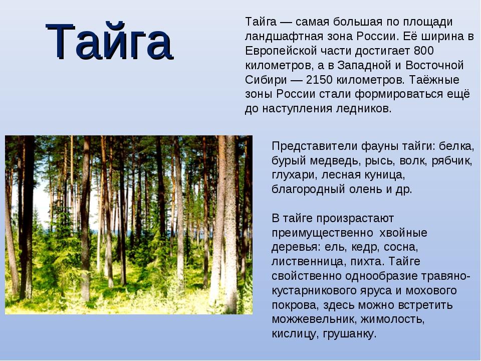 Тайга Тайга— самая большая по площади ландшафтная зонаРоссии. Её ширина в Е...
