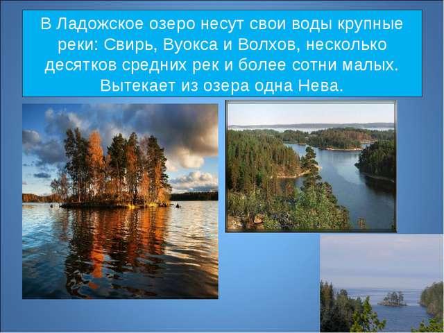 В Ладожское озеро несут свои воды крупные реки: Свирь, Вуокса и Волхов, неско...
