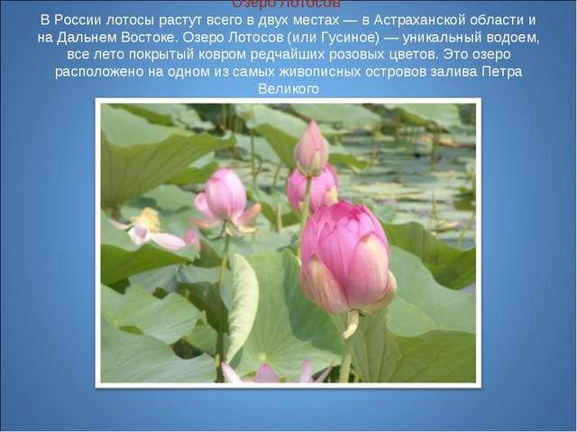 Озеро Лотосов В России лотосы растут всего в двух местах — в Астраханской об...