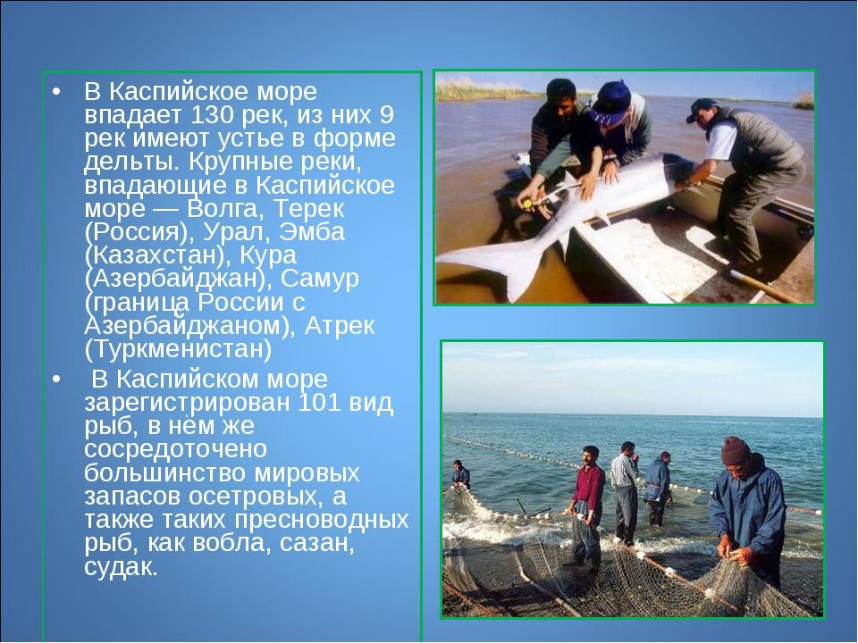 В Каспийское море впадает 130 рек, из них 9 рек имеют устье в форме дельты. К...