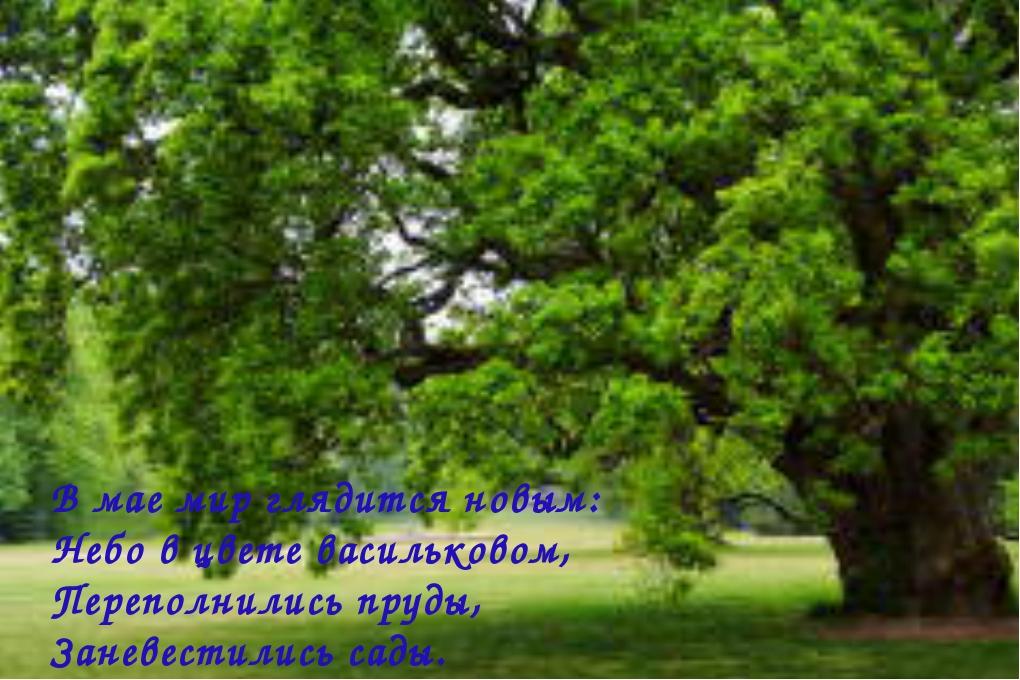 В мае мир глядится новым: Небо в цвете васильковом, Переполнились пруды, Зане...