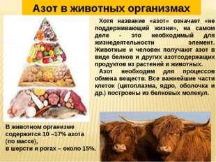 В животном организме содержится 10 –17% азота (по массе), в шерсти и рогах –