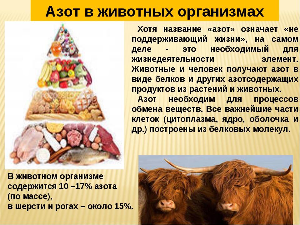 В животном организме содержится 10 –17% азота (по массе), в шерсти и рогах –...