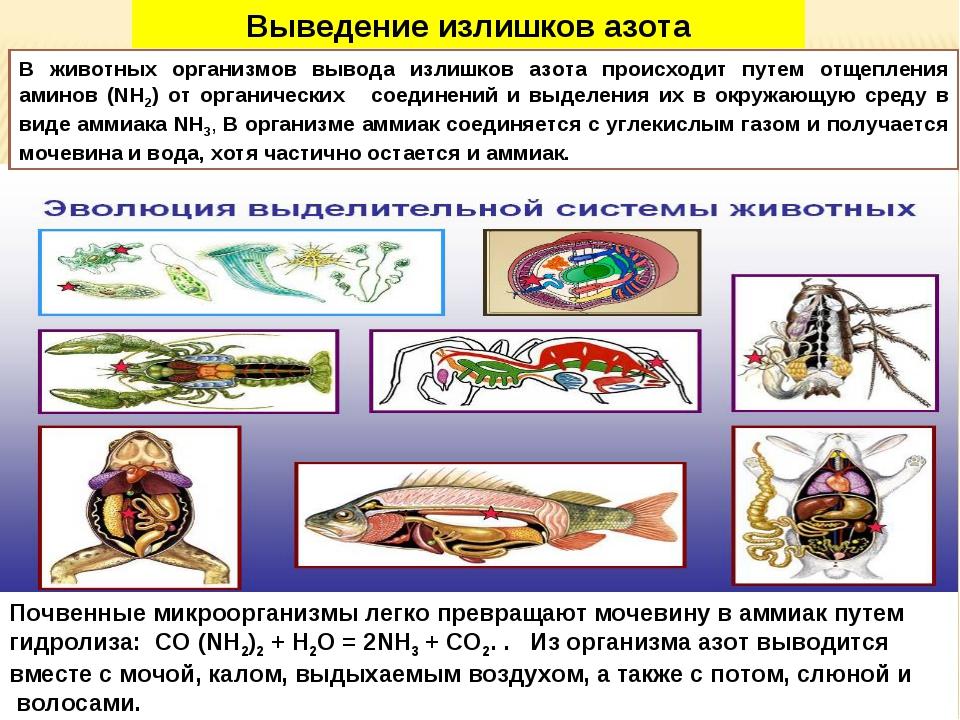 Почвенные микроорганизмы легко превращают мочевину в аммиак путем гидролиза:...