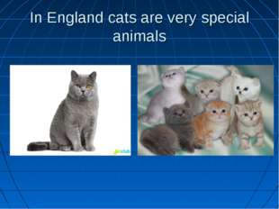 In England cats are very special animals