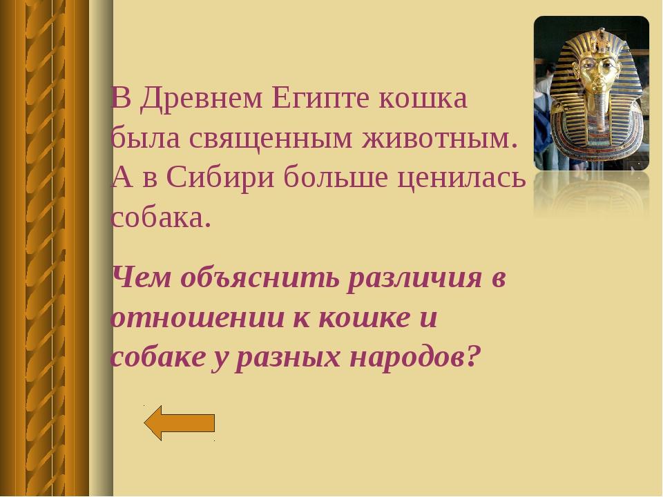В Древнем Египте кошка была священным животным. А в Сибири больше ценилась со...
