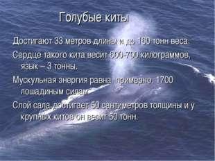 Голубые киты Достигают 33 метров длины и до 160 тонн веса. Сердце такого кита