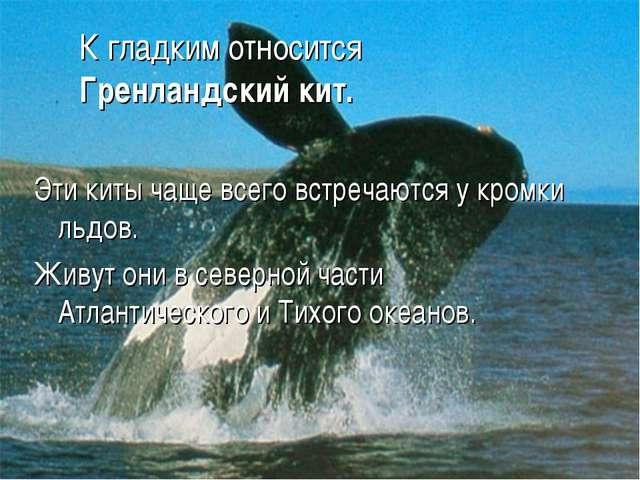 К гладким относится Гренландский кит. Эти киты чаще всего встречаются у кромк...