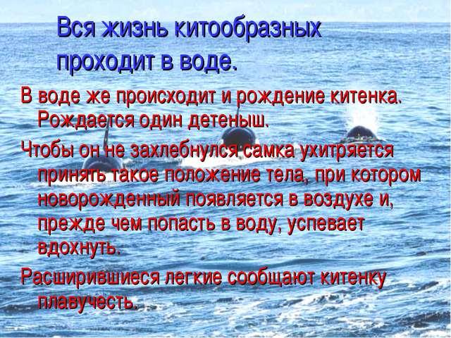 Вся жизнь китообразных проходит в воде. В воде же происходит и рождение китен...