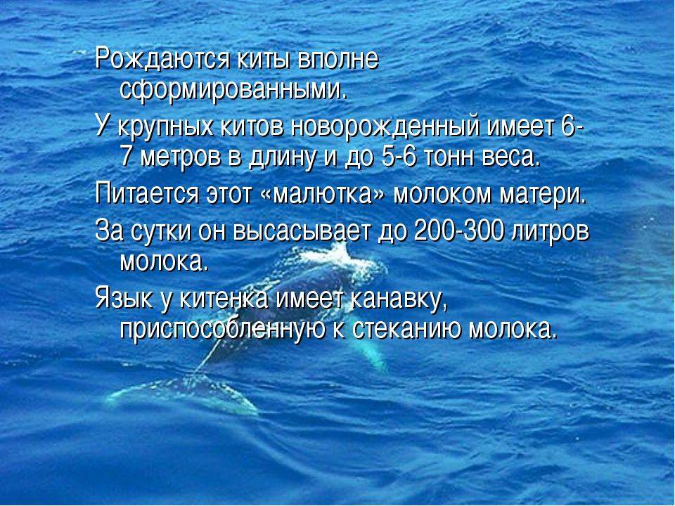 Рождаются киты вполне сформированными. У крупных китов новорожденный имеет 6-...
