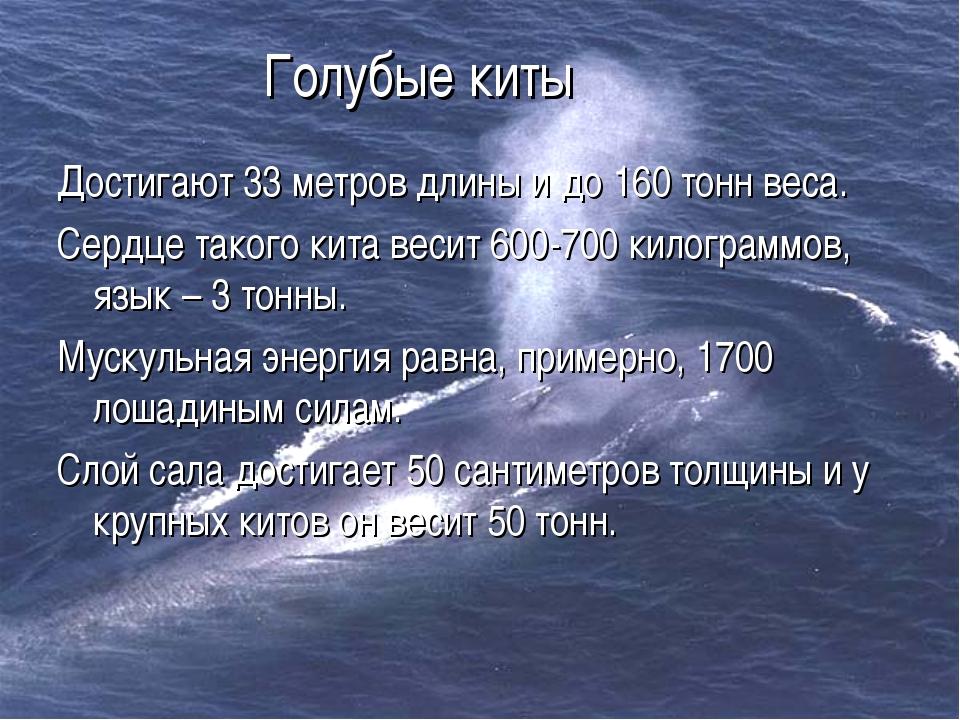 Голубые киты Достигают 33 метров длины и до 160 тонн веса. Сердце такого кита...