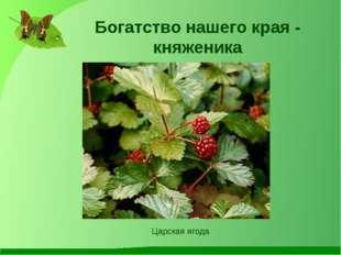 Богатство нашего края - княженика Царская ягода