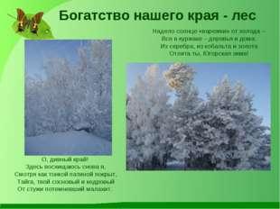 Надело солнце «варежки» от холода – Все в куржаке – деревья и дома: Из серебр