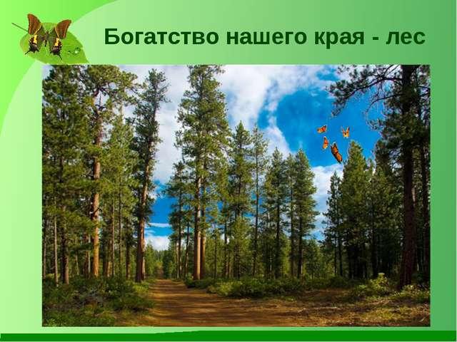 Богатство нашего края - лес