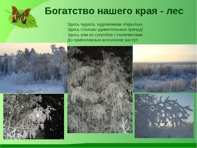 Богатство нашего края - лес Здесь чудеса, художникам открытые, Здесь столько...