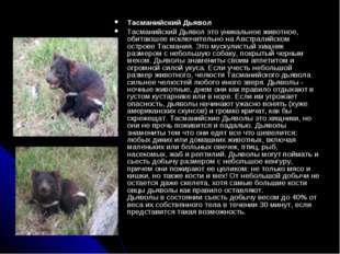 Тасманийский Дьявол Тасманийский Дьявол это уникальное животное, обитаюшее ис