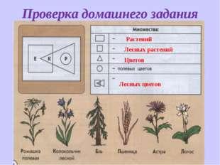 Растений Лесных растений Цветов Лесных цветов Проверка домашнего задания