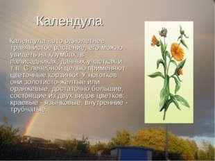 Календула Календула - это однолетнее травянистое растение, его можно увидеть