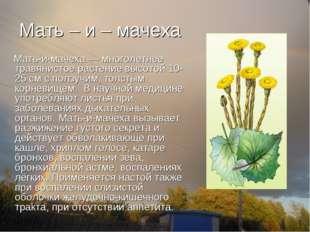 Мать – и – мачеха Мать-и-мачеха — многолетнее травянистое растение высотой 10