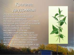 Крапива двудомная Это растение широко используется в научной и народной медиц