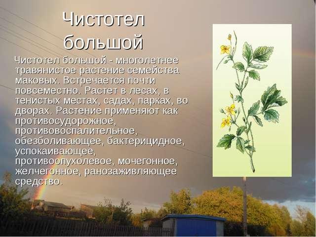 Чистотел большой Чистотел большой - многолетнее травянистое растение семейств...