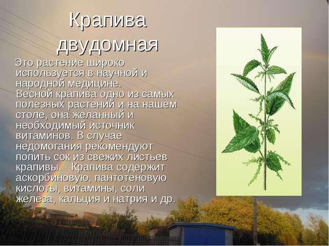 Крапива двудомная Это растение широко используется в научной и народной медиц...