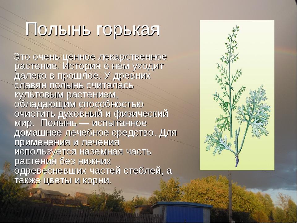 Полынь горькая Это очень ценное лекарственное растение. История о нем уходит...