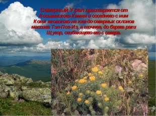 Северный Урал простирается от Косьвинского Камня и соседнего с ним Конжаковск