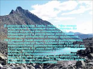 В широких долинах Тавды, Ницы, Уфы можно встретить пойменные озера-старицы. В