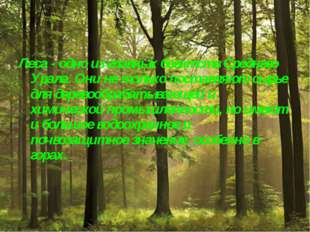 Леса - одно из главных богатств Среднего Урала. Они не только поставляют сырь