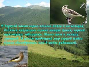 В верхней части горно-лесного пояса и на гольцах водятся некоторые горные пти