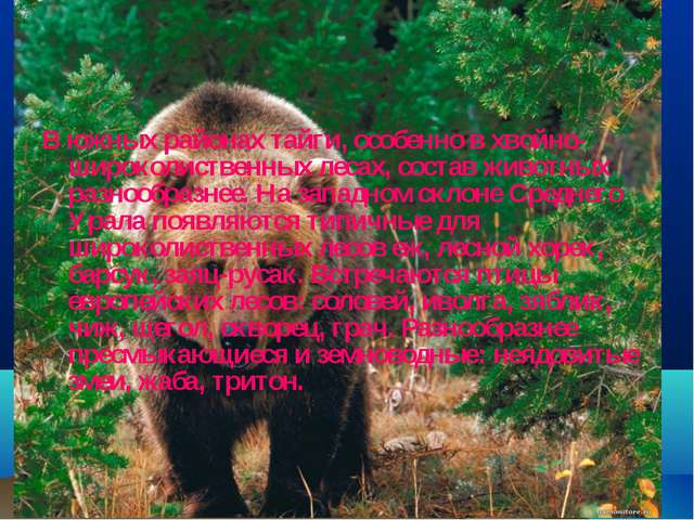В южных районах тайги, особенно в хвойно-широколиственных лесах, состав живот...