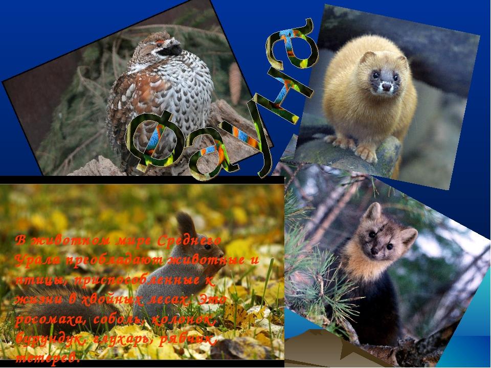 В животном мире Среднего Урала преобладают животные и птицы, приспособленные...