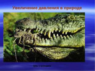 Увеличение давления в природе Зубы у крокодила