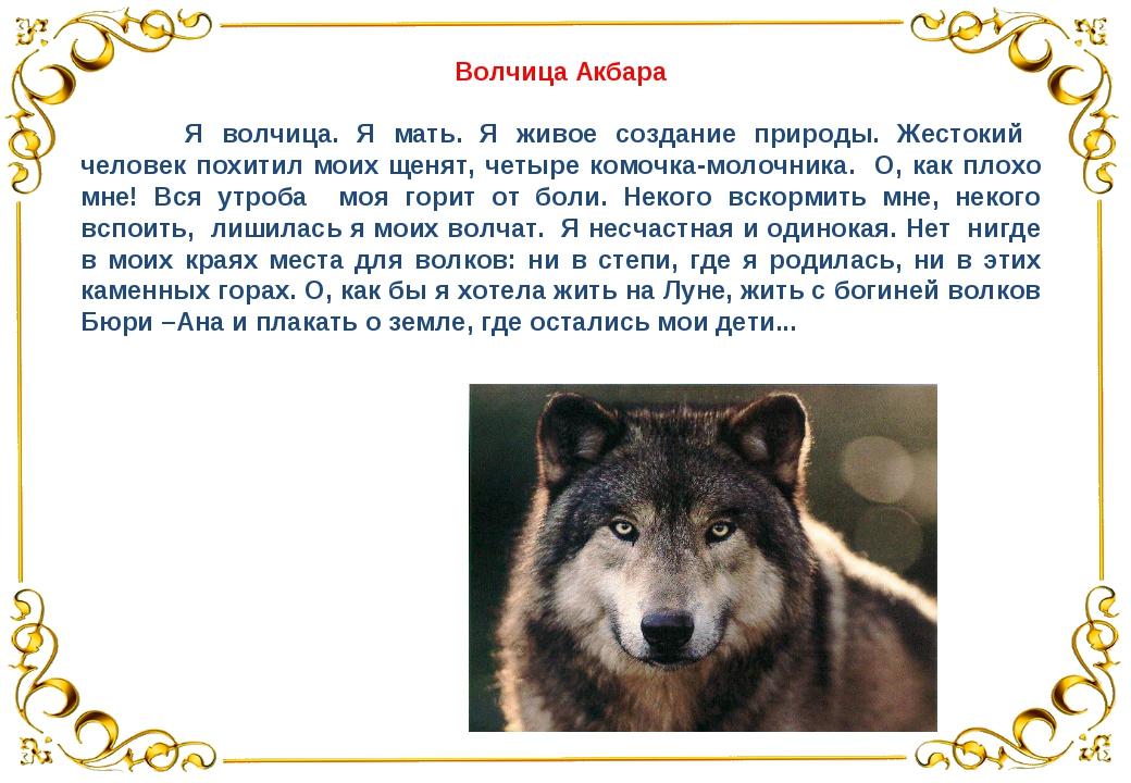 Волчица Акбара Я волчица. Я мать. Я живое создание природы. Жестокий человек...