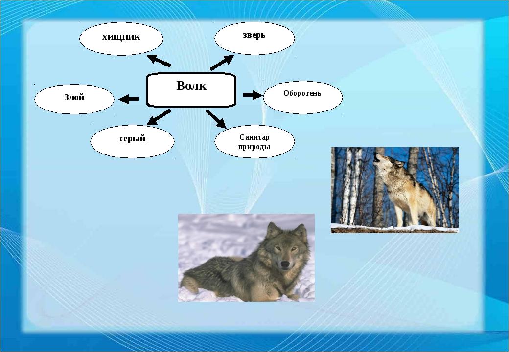 Волк хищник зверь Оборотень Санитар природы серый Злой