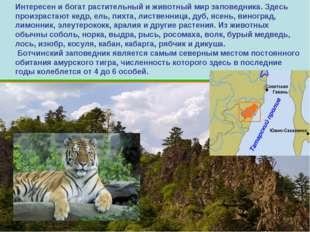 Интересен и богат растительный и животный мир заповедника. Здесь произрастают