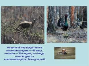 Животный мир представлен млекопитающими — 42 вида, птицами — 200 видов, по 4